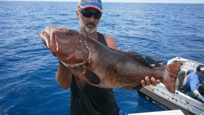 Timor Box awesome fish